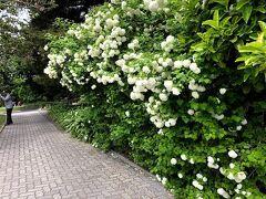 ボタニカルガーデンに到着。 ついて早々、綺麗なお花たちがお出迎え。  息子も、日本では見かけない 大きなまつぼっくりを拾ったりして テンションUP
