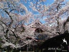 今回は地元からの出発ということで、 とても便利でした。  途中、SAで休憩を挟みつつ… 高遠城址公園の桜まつり会場へ…  数年前にバスツアーで高遠の桜まつりに来たことがあるのですが、 その年は寒かったため、まだ桜が咲いてないという…  ということで、こちらの桜もリベンジなのでした  お天気にも恵まれ、桜もちょうど見頃の様子  登録有形文化財の『高遠閣』も桜で埋もれて見えます