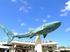 美ら海水族館 水族館は何度訪れても時間を忘れて楽しんでしまう。