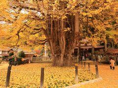13:00 筒賀大歳(つつがおどし)神社 筒賀の大銀杏  樹齢1100年超え、県の天然記念物。 盛大に散り始めだけど綺麗。   拝観料 無料 駐車場 無料