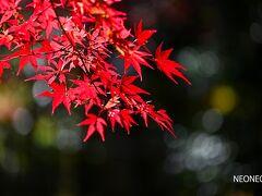 滋賀県でも湖東三山と言うと、紅葉の季節にはかなり混雑します。 と言っても、京都の比ではないのですが・・・  その中でも、一番北に位置する西明寺は比較的まし。 自家用車で山門近くまで上がれるようになりましたので、足腰に不安のある方にはうれしいようです。 (ただし、土日に上の駐車場に入るにはちょっと待ち時間があります)