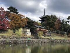 猿沢池の方から興福寺に入りました。 五重塔だー。