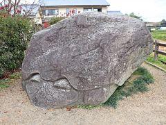 猿石をじっくりと観察していたら、あっという間に時刻はお昼近く。 この日のランチは石舞台遺跡でピクニック・ランチしよう♪と決めていたので、自転車を石舞台古墳に向けて走らせていたのだが、その途中で亀石に遭遇したので、自転車を降りて亀さんにご挨拶。  この巨大な亀の姿の亀石も、猿石同様に利用目的も時代も明らかになっていない石像で、おそらく飛鳥時代に彫られたのではないかと推測されている。
