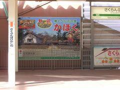 さくらんぼ東根駅のホームです。9時45分発 つばさ136号に乗車します。   さくらんぼで最もおいしい、と言われる品種「佐藤錦」。約8割の農家の方は、佐藤錦を植えています。ここ東根市は、さくらんぼ日本一の生産量を誇ります。