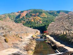 咲くや鮎河さくらまつり