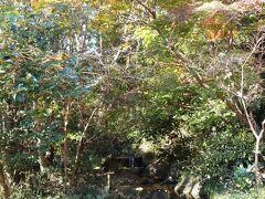 水源付近の紅葉
