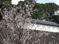 四季桜と富士見多聞
