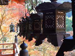 拝殿の周囲には燈籠がずらっと。