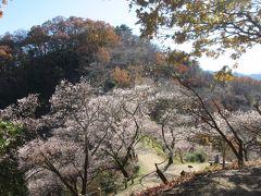 藤岡の桜山公園 去年「秋爛漫」に続き 再訪です( ^ω^ )