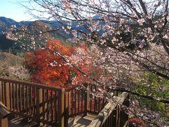 お目当の冬桜は………