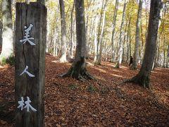美人林(   https://www.tokamachishikankou.jp/bijinbayashi/   )駐車場に停め・・林の中に・・・。