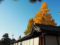五条烏丸のホテルからJR京都駅へ徒歩で向かいます。右側に東本願寺が。イチョウがキレイだなあ。