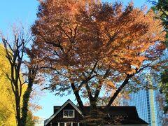 公園資料館と紅葉