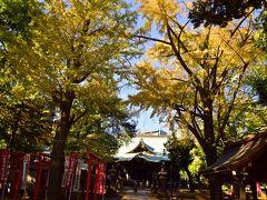 そして、今がちょうど見頃な全力全開の色付き具合を彩る当日の鬼子母神堂のイチョウ並木 おお~、これは素晴らしい!
