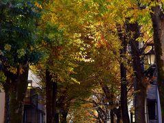 ま仕方ない この場所から一旦離れて、鬼子母神堂のほうに紅葉散策してみることにしました 鬼子母神大門のケヤキ並木も当日は実に見事な色付き具合でしたね~