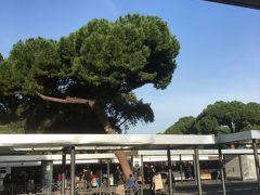 グーグルマップで調べると、テルミニ駅からボルゲーゼ美術館まで92番のバスでPucciniで降りるとなっていました。テルミニ駅前バス停です。バスの中で近くの人に聞いてみるとその次のPincianaのバス停の方が美術館に近いと分かりました。