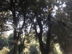 Pincianaのバス停からボルゲーゼ公園に入ります。美術館に近かったです。