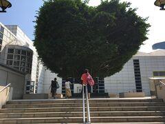 BPホテルの駐車場を抜けて九龍公園の体育館に行く方法を教えてもらいました。 駐車場を出ると、目の前に大きなハート形の樹があります。