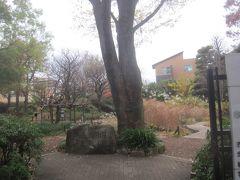 近くにある赤塚植物園に来ました