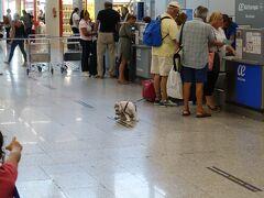 チェックインカウンターに犬が! この後このワンちゃんを抱っこして保安検査場を通っていらっしゃるのを見ました。 ヨーロッパは簡単に乗せられるのですね。