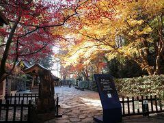 本当に紅葉がきれいで、ついつい写真をとってしまう。