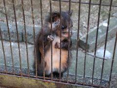 保護鳥獣舎にいたムササビです。  鳥獣舎の外で作業していた飼育員を呼んで啼いていたので子供かな?