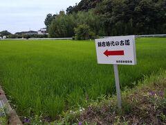 「鎌倉時代の古道」江戸時代でもすごいのに鎌倉時代の道。凄い。三ヶ野七つ道のひとつ。他にも明治・平成・昭和の道の標識を見ました。10:20通過。