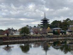 池越しに興福寺の五重塔が見える場所に来ました。晴れていればかなり面白い場所ですが、朝は曇っていて残念でした。ちなみにこの池は、明治時代に人工的に作られたため池です。