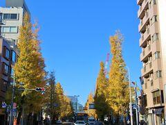 プラチナ通りのイチョウ並木も黄葉が綺麗