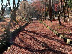 鶏足寺。(旧飯福寺) 現在は廃寺となっていますが 地域の方々によってお世話されており、参道の石段を赤く染める敷き紅葉がスンバラシイ紅葉名所。 が、こっちは見頃を大分過ぎてしまっていました…。