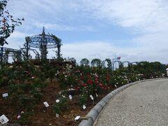 エコパークでは毎年、春と秋にローズフェスタがあり、秋のローズフェスタは11月から。 人もまばらでしたが、花はちらちら咲いていて綺麗でした。