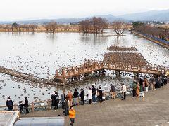 阿賀野市水原地区にある「瓢湖」(   https://niigata-kankou.or.jp/spot/10803   )です。
