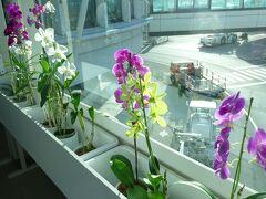 胡蝶蘭の花いっぱいでお出迎えです