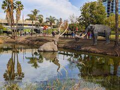 お隣りの「The La Brea Tar Pits and Museum」 建物内は有料だけど、このタールの池は見学無料だよ。 タールのニオイがプンプンします。