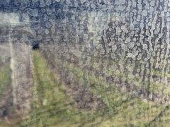 ティラーノを出た後も景色結構きれいだよ!とサイトで見てはいたのですが,全く見れたもんじゃありません(笑)。  でも,谷あいを走る列車の左右にブドウ畑がずーと連なっていていい景色ったことは確かです^^