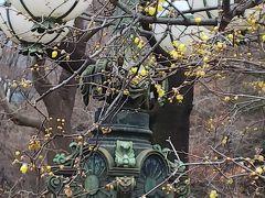 皇居正門石橋旧電飾機 そしんろうばい。 https://4travel.jp/travelogue/11576609 皇居に大嘗宮一般参観にいく のときは咲いてなかったはず