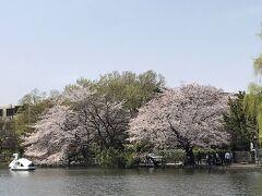 4/6 今日は本当にポカポカ陽気です。嫁さんと石神井公園で散歩です。