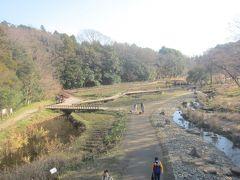 緑のかけ橋から湿生植物園を