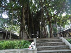 「台中文学館」とあった公園に立ち寄りました。 巨大なガジュマルの木があったので、今回同行したスヌ君たちとの記念写真を撮りました♪