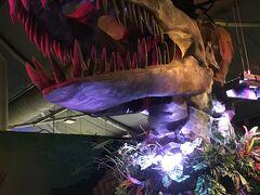 隣の シーライフ水族館へ行きました。