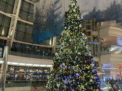 やはり、東京は寒い! クリスマスツリーもあります。冬だ。