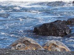 2頭のウミガメが陸に上って来た。夫婦だろうか?仲良く私たちを迎えてくれた。