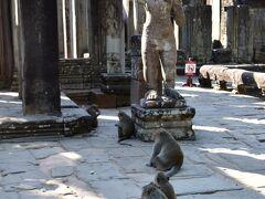 アンコール・トム遺跡の中心、バイヨン寺院入り口にて。  猿がいっぱい! ニホンザルと違って尻尾がなが~い。 観光客が持っている食べ物を執拗に狙ってくるのでお気をつけて!