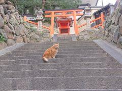 手力雄神社と猫