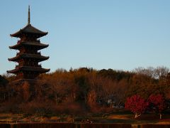 そしてこの日の目的地、備中国分寺の五重の塔へ・・ 夕焼けに照らされて風情があります