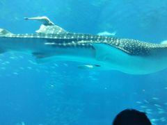 でも、ジンベイザメを見ると来たかいがあったなと…