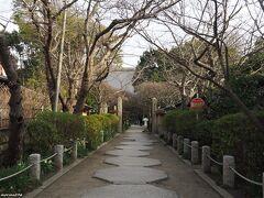 宝戒寺 参道  水仙が咲いています。
