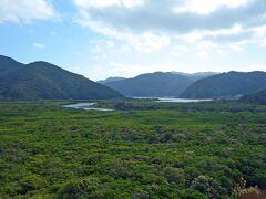 マングローブ原生林に到着。 マングローブとは、熱帯・亜熱帯地域の湿地帯や干潟に生息する植物の総称です。住用のマングローブはメヒルギとオヒルギで構成されています。役勝川と住用川が合流する河口域にはマングローブ原生林が71ha以上にわたって広がっており、国定公園特別保護区にも指定されています。