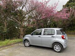 緋寒桜を見に奄美自然観察の森へ この旅行お世話になったFit