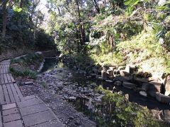 遊歩道は舗装されているかと思いきや、結構ガタガタなので川や木々に見とれているとスっ転ぶのである。 運動機能が衰え始める年齢なので、上にも下にも気を付けねばならんのだ。